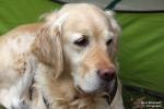<h5>Ernst Hobscheidt</h5><p>Fototour vom 10.04.2016  Agility Hundesport in Delbrück Bild 10</p>