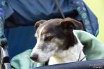 <h5>Ernst Hobscheidt</h5><p>Fototour vom 10.04.2016  Agility Hundesport in Delbrück Bild 4</p>