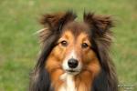 <h5>Ernst Hobscheidt</h5><p>Fototour vom 10.04.2016  Agility Hundesport in Delbrück Bild 5</p>