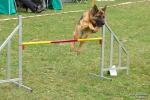 <h5>Ernst Hobscheidt</h5><p>Fototour vom 10.04.2016  Agility Hundesport in Delbrück Bild 9</p>