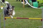 <h5>Ernst Hobscheidt</h5><p>Fototour vom 10.04.2016  Agility Hundesport in Delbrück Bild 28</p>