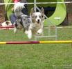 <h5>Ernst Hobscheidt</h5><p>Fototour vom 10.04.2016  Agility Hundesport in Delbrück Bild 27</p>