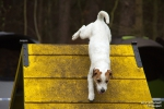 <h5>Ernst Hobscheidt</h5><p>Fototour vom 10.04.2016  Agility Hundesport in Delbrück Bild 32</p>