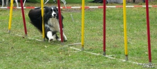 <h5>Ernst Hobscheidt</h5><p>Fototour vom 10.04.2016  Agility Hundesport in Delbrück Bild 31</p>