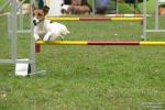 <h5>Ernst Hobscheidt</h5><p>Fototour vom 10.04.2016  Agility Hundesport in Delbrück Bild 18</p>