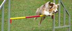 <h5>Ernst Hobscheidt</h5><p>Fototour vom 10.04.2016  Agility Hundesport in Delbrück Bild 33</p>