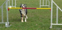 <h5>Ernst Hobscheidt</h5><p>Fototour vom 10.04.2016  Agility Hundesport in Delbrück Bild 29</p>
