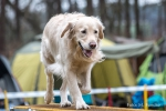 <h5>Manfred Funcke</h5><p>Fototour vom 10.04.2016  Agility Hundesport in Delbrück</p>