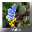 Makro GR