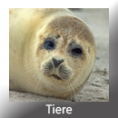 Tiere EH