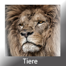 Tiere Front