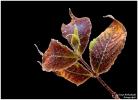 <h5>Makro 7</h5><p>Der erste Frost im Herbst</p>