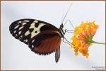 <h5>Makro 45</h5><p>Schmetterling</p>
