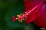<h5>Makro 25</h5><p>Blüte</p>