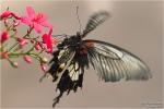 <h5>Makro 46</h5><p>Der Anflug eines Schmetterlings</p>