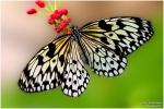 <h5>Makro 44</h5><p>Schmetterling</p>