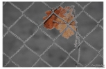<h5>Makro 22</h5><p>Das Blatt im Zaun</p>