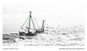 <h5>Krabbenfischer</h5>
