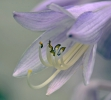 <h5>Blüte</h5>