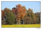 <h5>Herbstlandschaft</h5>