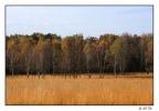 <h5>Herbst in der Senne</h5>