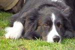 <h5>Ernst Hobscheidt</h5><p>Fototour vom 10.04.2016  Agility Hundesport in Delbrück Bild 3</p>