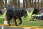 <h5>Ernst Hobscheidt</h5><p>Fototour vom 10.04.2016  Agility Hundesport in Delbrück Bild 7</p>