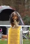 <h5>Ernst Hobscheidt</h5><p>Fototour vom 10.04.2016  Agility Hundesport in Delbrück Bild 13</p>