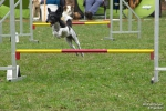 <h5>Ernst Hobscheidt</h5><p>Fototour vom 10.04.2016  Agility Hundesport in Delbrück Bild 19</p>