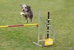 <h5>Ernst Hobscheidt</h5><p>Fototour vom 10.04.2016  Agility Hundesport in Delbrück Bild 30</p>