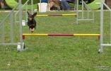 <h5>Ernst Hobscheidt</h5><p>Fototour vom 10.04.2016  Agility Hundesport in Delbrück Bild 20</p>
