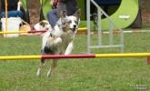 <h5>Ernst Hobscheidt</h5><p>Fototour vom 10.04.2016  Agility Hundesport in Delbrück Bild 24</p>