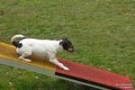 <h5>Ernst Hobscheidt</h5><p>Fototour vom 10.04.2016  Agility Hundesport in Delbrück Bild 21</p>