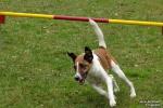 <h5>Ernst Hobscheidt</h5><p>Fototour vom 10.04.2016  Agility Hundesport in Delbrück Bild 22</p>