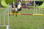 <h5>Ernst Hobscheidt</h5><p>Fototour vom 10.04.2016  Agility Hundesport in Delbrück Bild 25</p>